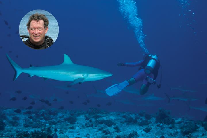 shark_sammich